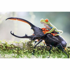 Full Drill Diamond Painting Kit Like Cross Stitch Insect and Frog Friends ZC009D