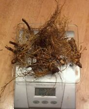 2 oz.  Fresh Golden Seal Root (Yellow Root ) (Live Roots)