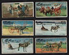 Animal Transport German Gartmann Card Set 1900s Sleigh Reindeer Cow Ostrich Mule