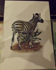 N°138 Mammal Poster The Zebra of Chapman Steppes Africa