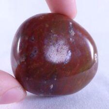 Madera fosilizadas petrificado Podocarpus pulido forma libre - 45 mm, 59g