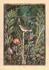 Pompeji Italien Vogel Fresko Triklinium Haus des goldenen Armreifs Bütten Faks 2