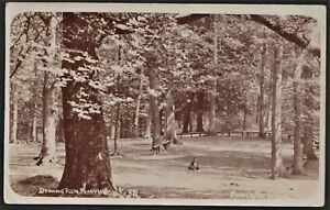PERRY WOOD postcard The Drawing Room (trees)