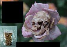 10x Rosen Schädel Samen Saatgut Blume Pflanze Rose Rarität Antirrhinummajus #7