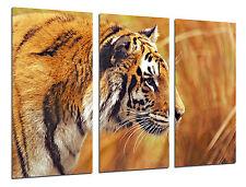 Carreau Moderne Photographie Lion, Animaux, 97 x 62 cm Réf. 26303