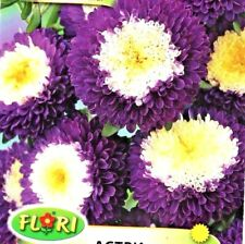 ASTER - POM POM -  CALLISTEPHUS CHINENSIS - 250 HIGH QUALITY FLOWER SEEDS /1295