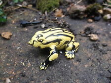 Small plastic Australian amphibian CORROBOREE frog replica Science and Nature
