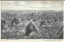 Wheat Sheaves in Stocks PPC, Series 106 Kerry Sydney Unposted, Stooks in Field