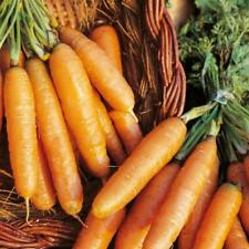 Pack Kings Vegetable Seed Carrot 'Amsterdam Forcing' Garden Seeds