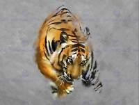 Poster Print Art A1 A2 A3 A4 PREDATOR SAND TIGER SHARK Animal Poster 3650