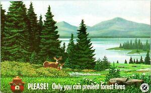 Forest Fire Prevention Smokey Bear Postcard Unused (34421)
