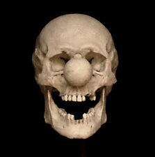 Clown Skull Replica