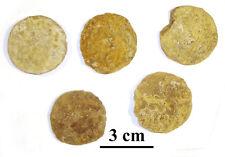 NEW!! Rare! Giant Nummulites, Eocene, Armenia, 38-37 m.a., lot of 5 ps #11