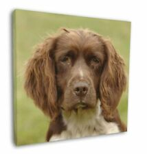 "Liver Springer Spaniel Dog 12""x12"" Wall Art Canvas Decor, Picture Pr, AD-SS6-C12"