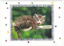 CHAT  Chaton  carte postale n° 9924800062 cadre avec motifs argentés