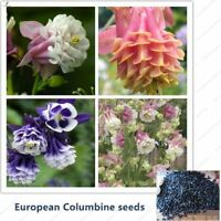 European Columbine Seed Aquilegia vulgaris rare bonsai flower  for home garden P
