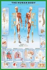 The Human Body Poster 61x91cm Anatomy Chart Organ Skeleton Spine Parts Name