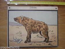 Circa 1920 Planche scolaire PERROT STAUB NATHAN l'hyene carnivore 20's