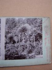 Stereo View Card R W Meers New Zealand Landscape