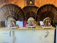 Taxidermy Turkey Mount