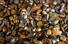 Golden Blue Star Sapphire Loose Gemstone Lot 5000 Ct Natural Untreated Mix Shape