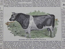 The Cultivator & Country Gentleman, in-text illustration #10 Holstein Bull