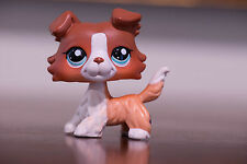 *Littlest Pet Shop* Hasbro LPS Cute Brown White Red Collie Puppy Dog Blue Eyes @