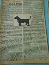 La Basset fauve de Bretagne chien dog Coupure de presse 1958