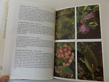 1975 Wilde Blumen der Kanalinseln 1st ED John bichard Illustrierte Botanik