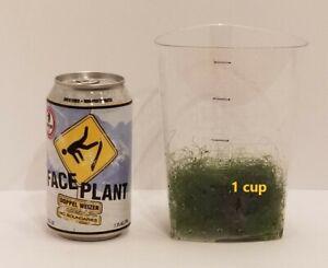 1 cup of Macro Algae Chaetomorpha Chaeto for Marine Aquarium Refugium