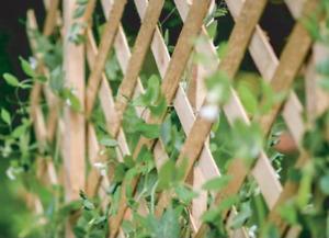 Expanding Natural Wooden Trellis Climbing Plants Fence Panel Screening Lattice *