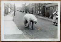 photo argentique d'un ours polaire en ville vers 1930