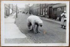 photo argentique d'un ours polaire en ville vers 1930