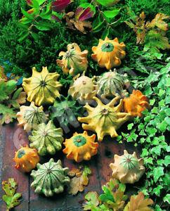 GOURD CROWN Of THORNS (50 seeds) Cucurbita Pepo Ornamental Pumpkin