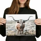 A4 - Texas Longhorn Cow Cattle Poster 29.7X21cm280gsm #3428