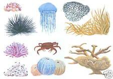 SEA CORAL ART TRANSFERS CREATIVE ART DECAL WALL DECOR TATOUAGE
