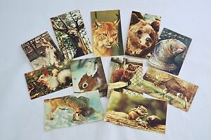 Vintage postcards Moscow ZOO Animals 11 cards 1969 Russian Ukrainian USSR US75