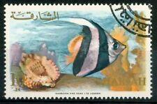 Sharjah 1966 SG 222 Usato 100% Pesci
