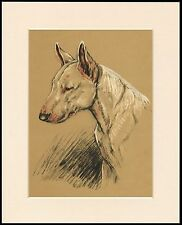 ENGLISH BULL TERRIER HEAD STUDY LOVELY LITTLE DOG PRINT MOUNTED READY TO FRAME