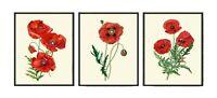 Unframed Botanical Red Poppy Poppies Print Wall Art Set of 3 Vintage Home Decor