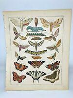 Antique large handcolored print 1843.Oken's Naturgeschichte Plate 14 Butterflies