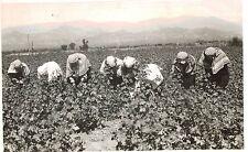 RPPC,Istanbul,Turkey,Women Picking & Labeling Cotton Balls,Sent U.S.Embassy,1949