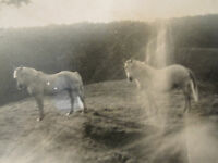 ANTIQUE VINTAGE WHITE HORSES ARTISTIC ABSTRACT VERNACULAR PHOTOGRAPHY FINE PHOTO
