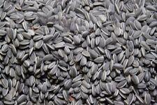 Ai Weiwei Porcelain Sunflower Seeds LONDON TATE MODERN 1000 pc