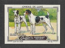 1931 France Cailler Kohler Dog Art Trade Card Wirehaired & Smooth FOX TERRIER
