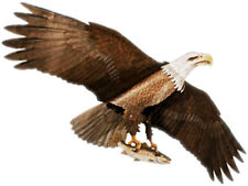 Jackite Bald Eagle Kite / Windsock