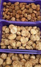 white truffle (fresh)fungus. Read Description before you buy