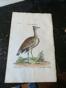 Birds - Collection of Various Birds Foreign & Rare, Seligmann, 1755 Plate XXIII