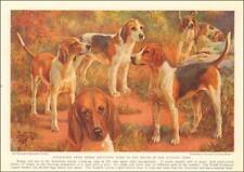Foxhound Dogs, American, Welsh, English, by E. Miner, vintage print 1937