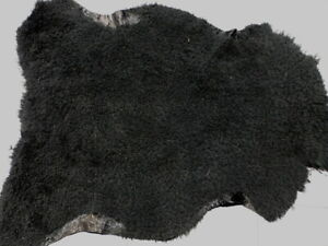 sheepskin shearling leather hide Curly Nappy Black w/Alligator smooth back